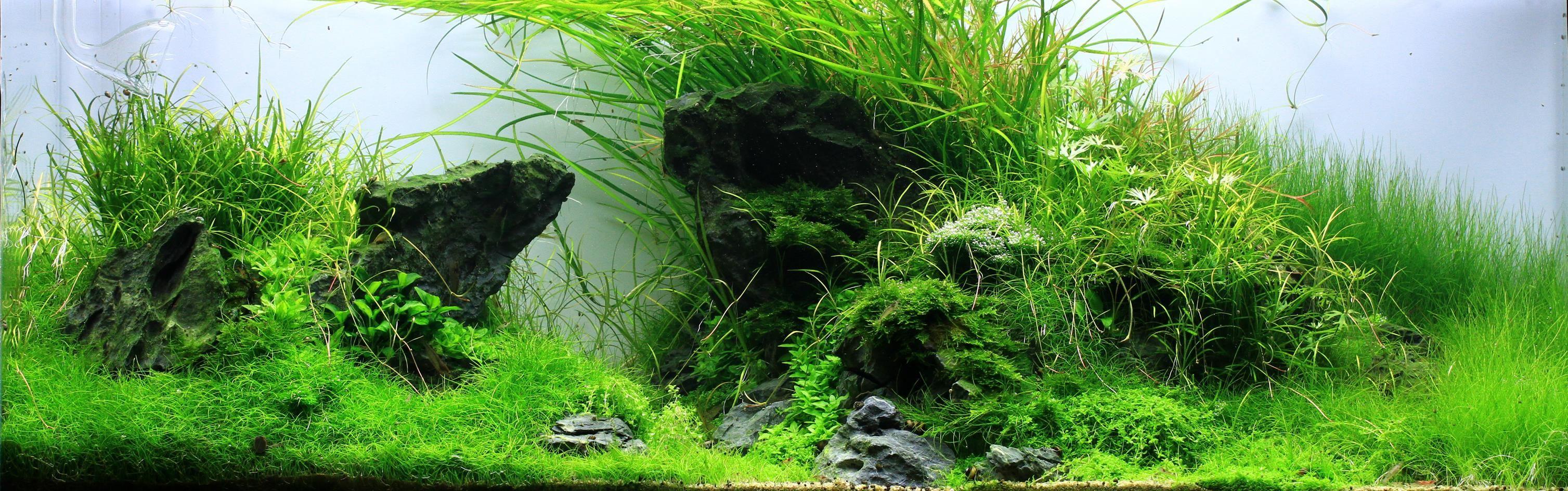 All about Aquascaping | Aquasabi Online Shop