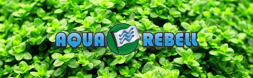 Aquasabi - All about Aquascaping | Aquasabi - Aquascaping Shop