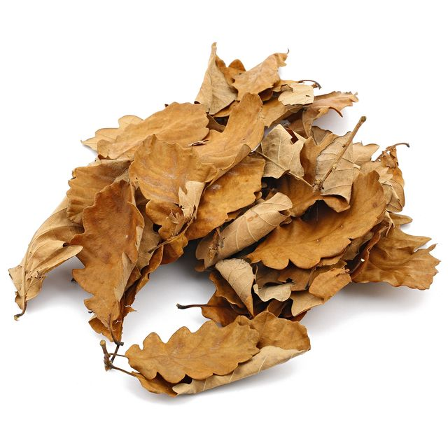 Oak Leaves - Brown