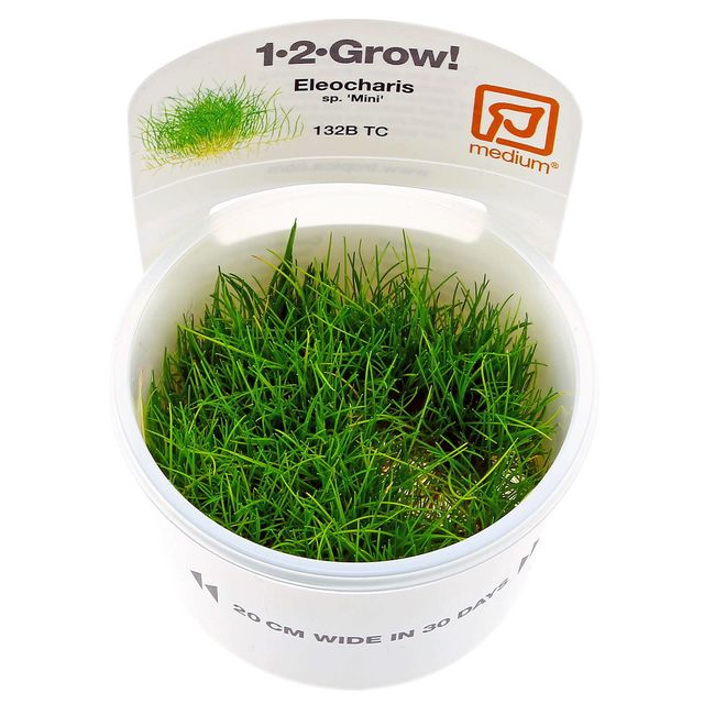 <b>Eleocharis sp. 'Mini'</b><br />Mini hairgrass