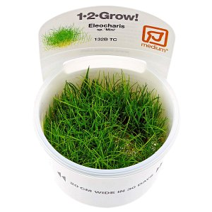 Eleocharis sp. Mini - 1-2-GROW!
