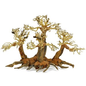 Forest-Bonsai - L - 5