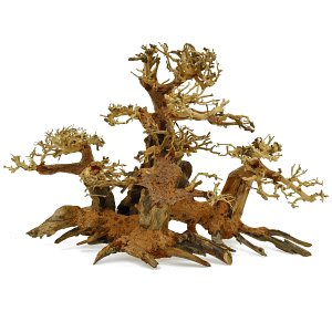 Forest-Bonsai - M - 8